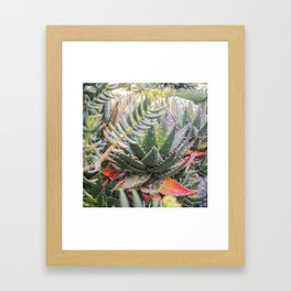 Colorful Aloe Succulents Framed Art Print