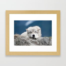 Sleepy Wolf Framed Art Print