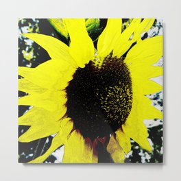 Hana Collection - Sunflower - Himawari Metal Print