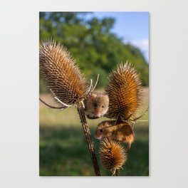 Harvest Time. Canvas Print