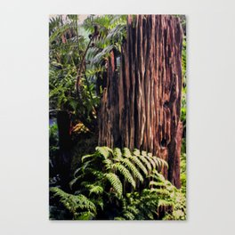Rotting Wood Canvas Print