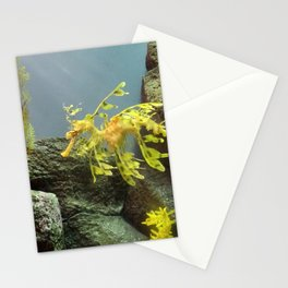 Leafy Sea Dragon with Rocks Stationery Cards