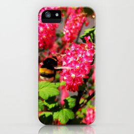 Bumble Bee and Blood Currant Ribes Sanguineum std iPhone Case