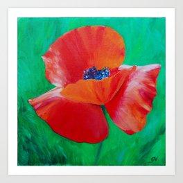 Single Poppy Art Print