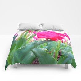 Hang Low Comforters