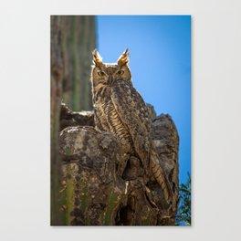 Elf Owl #2 Canvas Print