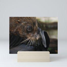 Fur Seal Mini Art Print