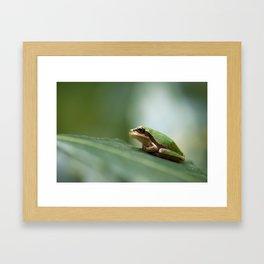 Mediterranean Tree Frog - Hyla meridionalis 8203 Framed Art Print