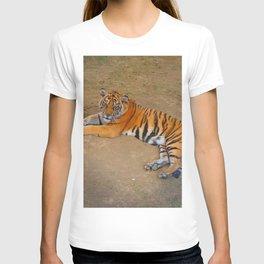 The Gaze of a Tiger T-shirt