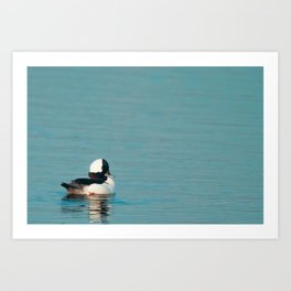 Bird - Bufflehead - Study 3 Art Print