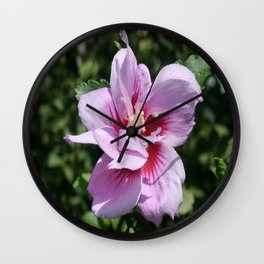 Double Headed Marsh Mallow Althaea Officinalis  Wall Clock
