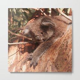 Cute Koala 1214 Metal Print