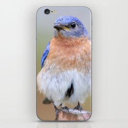 Fluffy Bluebird iPhone Skin