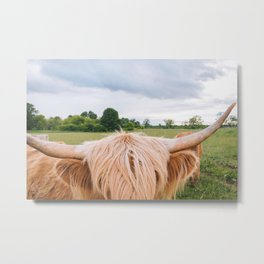 Highland Cow - Longhorns Metal Print
