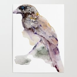 Watercolor Dunnock Painting Poster