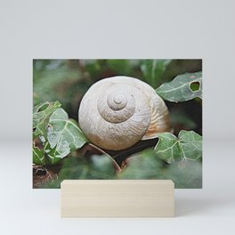 Pearly White Snail Shell | Oil Canvas Painting Mini Art Print