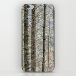 Wintry forest iPhone Skin