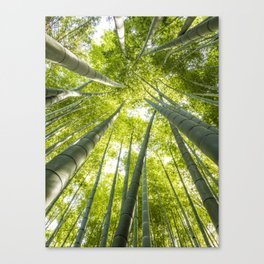 Bamboo forest in Japan Canvas Print