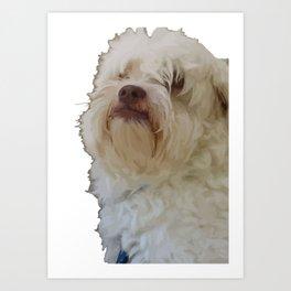 Grumpy Terrier Dog Face Art Print