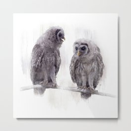 Young Barred Owls Perched on a Branch,Watercolor painting Metal Print