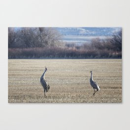 The Call of the Sandhill Cranes Canvas Print