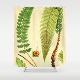 Vintage Botanical illustration, 1916 (Fern) Shower Curtain