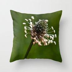 Last bloom of clover Throw Pillow