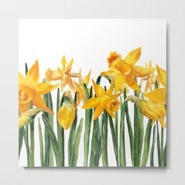 watercolor yellow narcissus Metal Print
