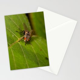Macro dicky Stationery Cards