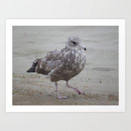 Ocean Shores gull Art Print