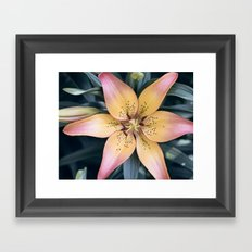 Lily Flower Photography, Pink Peach Lilies Flowers, Nature Botanical Photography Framed Art Print