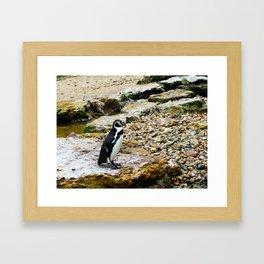 Penguin stare Framed Art Print