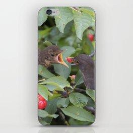 turdus merula common blackbird give food at her puppy iPhone Skin