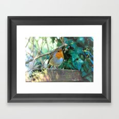 Curious Robin Framed Art Print
