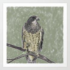 Black-chested buzzard-eagle (Geranoaetus melanoleucus) Art Print