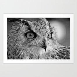 Bengal Owl black and White Art Print