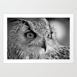 Bengal Owl black and White Art Print