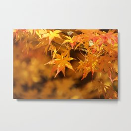 Colorful Japanese Maple Leaves In Fall Photography Metal Print