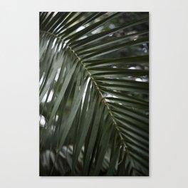 Plant - Fern 2 Canvas Print
