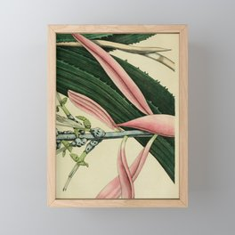 Flower bilberghia fasciata 229 Framed Mini Art Print