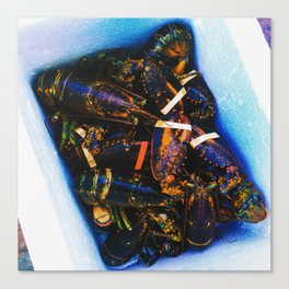 Maine Lobsters Canvas Print