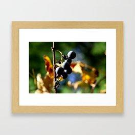 Grapes on the Vine Framed Art Print
