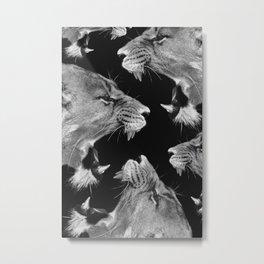 Lion B&W Metal Print