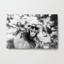 Monkey Pucker Metal Print