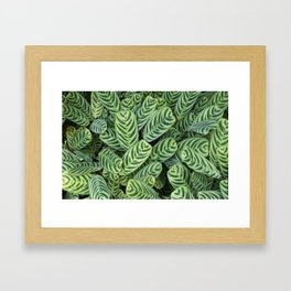 Multi Green leaves closeup Framed Art Print