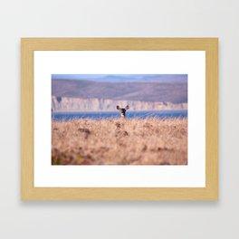 Deer at Chimney Rock Framed Art Print