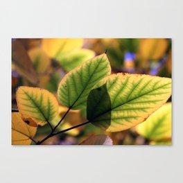 Dreamy Leaves Canvas Print