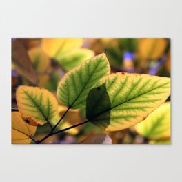 Dreamy Leaves Canvas Print