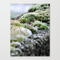moss Canvas Prints featuring Moss by Danny Arthurs