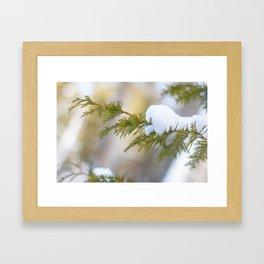 Snow on Cedar Framed Art Print